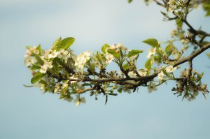 blooming-blossom-branch-2081
